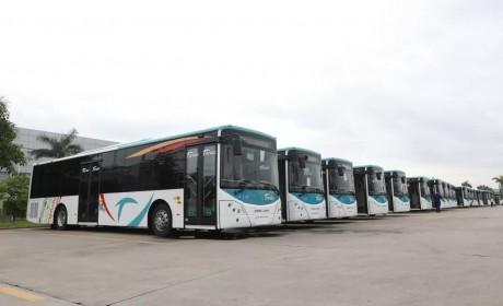 """金龙客车78辆""""高颜值""""公交在新喀里多尼亚首都上线"""