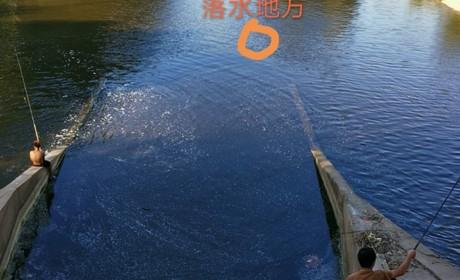 少年溺水,众人河边围观,路过半挂司机却果断跳水救人!20分钟救起一条人命!
