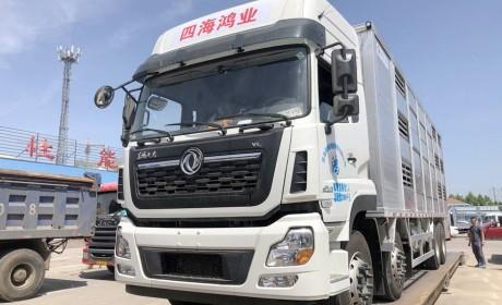 专业的猪崽运输车,售价高达80万?天龙VL载货车底盘的畜禽运输车实拍